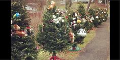 Heartbreaking photo of Christmas trees for each of the Sandy Hook Elementary victims :( Holiday Tree, Christmas Trees, Newtown Shooting, Sandy Hook, School Shootings, Today Show, Latest Video, Teddy Bears, Quotation