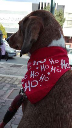 Κυκλοφορούν πολλοί μύθοι γύρω από τα σκυλιά.Ευτυχώς όμως υπάρχουν οι επιστήμονες και οι ερευνητές που δίνουν απαντήσεις σε πολλά ερωτήματα που αφορούν τους σκύλους, διορθώνοντας τις λανθασμένες απόψεις.