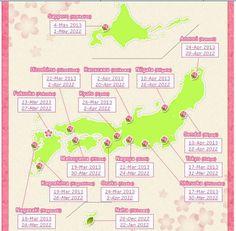 """ในบรรดาฤดูกาลทั้งสี่ของญี่ปุ่น ฤดูที่ชาวญี่ปุ่นปิติยินดีกันมากที่สุด คือฤดูที่ดอกซากุระเบ่งบาน กล่าวกันว่า ชาวญี่ปุ่นชื่นชอบซากุระมาตั้งแต่ 1,300 ปี ถึงแม้ว่าจะมีชื่อว่า """"ซากุระ"""" เหมือนกัน แต่ความจริงแล้วซากุระมีกว่า 300 สายพันธุ์ที่แตกต่างกันที่ สี รูปทรง และช่วงเวลาที่ดอกผลิบานนั้น จะแตกต่างกันไปตามสายพันธุ์ ดอกซากุระ ทั่วไปเป็นสายพันธุ์ที่มีชื่อว่า """"โซเม...อิโยชิโนะ"""" ซึ่งมีมากที่สุดในญี่ปุ่น จึงถูกขยายพันธุ์ไปทั่วโลกได้"""