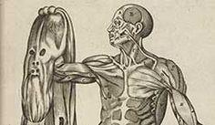 vesalius-illustration.jpg