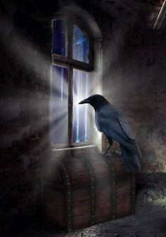 "Crows Ravens: #Raven ~ ""Waiting for Nothing,"" by AnOtherSunrise."