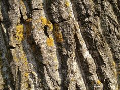 Check out Dry Bark - Texture by Riccardo Anelli on Creative Market ::: #photo #photos #photography #nature #texture #background #wood #dry #bark #tree #trunk #log #moss #veining #vein #strong #old #garden #brown #lightbrown #darkbrown #yellow #white