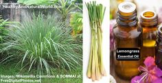 Lemongrass Essential Oil Uses and Benefits – Ultimate Guide Lemongrass Essential Oil Uses, Doterra Lemongrass, Homeopathic Remedies, Natural Remedies, Health And Beauty, Health And Wellness, Healing Oils, Carrier Oils, Cooking Oil