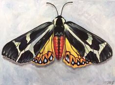 Types Of Moths, Original Paintings, Original Artwork, Tiger Moth, Beautiful Textures, Patterns In Nature, Insect Art, Watercolor Paper, Science And Nature