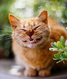 12 Cats With the Biggest Smiles - Cats Tips & Advice | mom.me