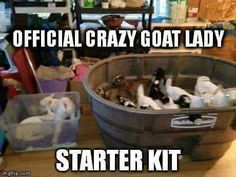 I'd be content on being a crazy goat lady