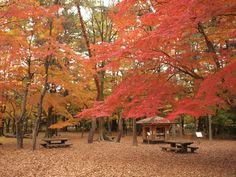 京都御苑 「母と子の森」森の文庫 2009.11.29 /アンジュー フォトギャラリー