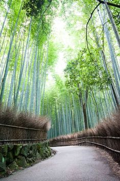 At the Arashiyama Bamboo Forest in Kyoto, Japan.