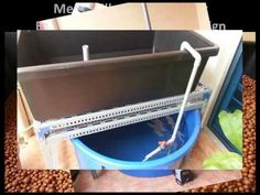 Aquaponics System And How To Build One