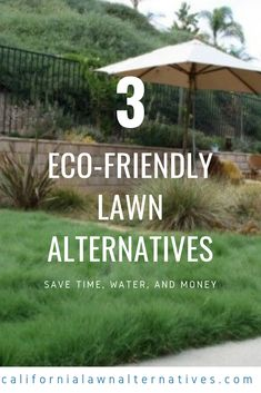 UC Verde, Kurapia, and Ruschia 'Nana' are 3 great lawn alternatives that can save you time, water, and money! Lawn And Garden, Home And Garden, Healthy Environment, Lawns, Drought Tolerant, Yard Landscaping, Nevada, House Plants, Landscape Design