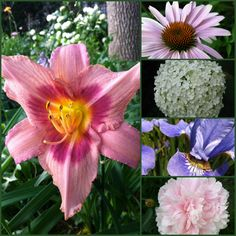 Great Article - Low maintenance perennials with beautiful flowers include coneflowers, hydrangea, irises, peonies and day lilies. Flower Garden, Flowers Perennials, Low Maintenance Garden, Beautiful Flowers, Perennials, Flowers, Garden Planning, Day Lilies, Perennial Garden