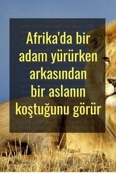 Afrika'da bir adam yürürken arkasından bir aslanın koştuğunu görür   www.corek-otu-yagi.com Allah, Youtube, Africa, Youtubers, Youtube Movies