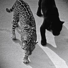Here Kitty, Kitty.......