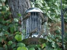 Stainless Steel Squirrel Proof Thistle Bird Feeder