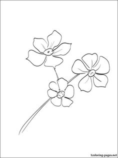 Forget me not flowers drawings spring flower material of tattoo forget me nots coloring page coloring pages ccuart Image collections