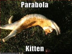 Who knew kittens could be a parabola?