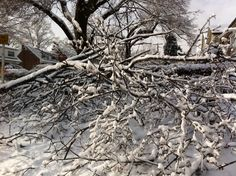 Ice storm Ice Storm, City Photo, Snow, Outdoor, Outdoors, The Great Outdoors, Eyes, Let It Snow