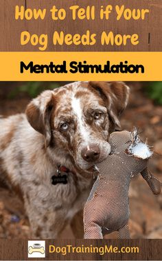 Is your dog bored? Are they getting enough mental stimulation? We show you some signs you can look for to see if your dog is bored and give you some tips to help.