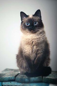 Cat-Tube | Самые смешные коты здесь! | Страница 63