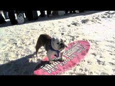 Tillman the bulldog skimboards, snowboards and skateboards to The Beach Boys Surfin' USA