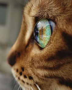 The short answer is yes, cats can see some colors, but not the same range that we can. Let's dig into how cats see and which colors their eyes can detect. Cute Kittens, Kittens Playing, Cats And Kittens, Bengal Cat Personality, Animals And Pets, Cute Animals, Adventure Cat, Son Chat, Super Cat