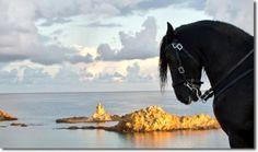Excursiones a caballo en Menorca - Quiénes somos Menorca Equus