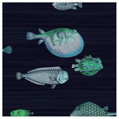 Buy Cole and Son Acquario at Wallpaper Trail for only with FREE UK postage. All wallpapers from the Cole and Son Fornasetti II collection available. Fish Wallpaper, Wallpaper Decor, Wallpaper Online, Bathroom Wallpaper, Print Wallpaper, New Wallpaper, Fabric Wallpaper, Modern Wallpaper, Wallpaper Ideas