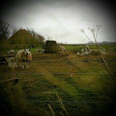 Texel,  mijn eiland ♡