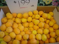Fresh apricots! Just arrived a few minutes ago! What will you make with these?