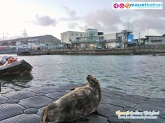 Alex King from the Mount Batten Watersports and Activities Centre sent in this amazing shot of a local Seal taking a rest outside the centre this morning :) Plymouth Barbican, Alex King, Devon And Cornwall, Batten, Water Sports, Say Hello, Pop Up, Portal, Places Ive Been