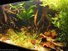 aquascaping with roots