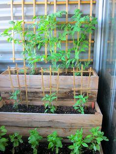 urban gardening, growth.