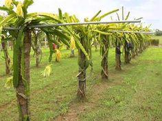 Veracruz Agropecuario - Día del fruticultor en el C. E. Cotaxtla INIFAP - TVMÁS - YouTube