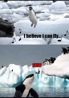 Penguin ~ Whale ~ Humour ~ Picture ~ Quote