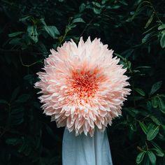 Papieren bloemen met architectonische precisie –   Tiffany Turner is van huis uit architect. In dit werk ontdekte ze dat ze het vooral interessant vindt om uit te zoeken hoe iets is gemaakt en hoe de natuur terugkerende patronen gebruikt. Dit combineerde …