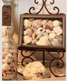 How to display  seashells.