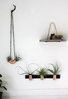 All about these DIY copper air plant holders.
