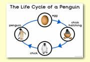 'The Life Cycle of a Penguin' A3 Poster