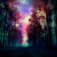 Magical Forest Canvas Print - Wallpaper World Galaxy Wallpaper, Cool Wallpaper, Wallpaper Backgrounds, Nature Wallpaper, Wallpaper Desktop, Phone Backgrounds, Worship Backgrounds, Desktop Wallpapers, Magical Forest