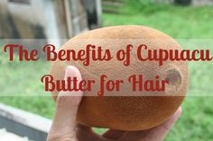 Learn about the benefits of cupuacu butter for hair care. Learn about the benefits of cupuacu butter for hair care. Cupuacu Butter, Funny Health Quotes, Organic Hair Care, Hair Care Tips, Hair Health, Hair Oil, Natural Skin, Healthy Hair, Benefit