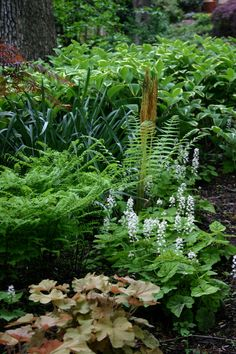 Wonderful mix of green textures, Ferns, Coral Bells, Solomon Seal, Surprise Lily and Foam Flower all mix well in shade.