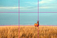 The Rule of Thirds: A Photography Tip for Designers