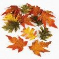 Assorted Fall Leaves