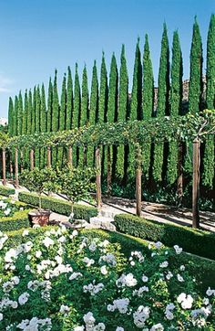 cypress and lemon trees - Tuscany...Italy White Gardens, Traditional Landscape, Hedges, Formal Gardens, Dream Garden, Italian Garden, Italian Summer, Tuscan Garden, Garden Landscaping