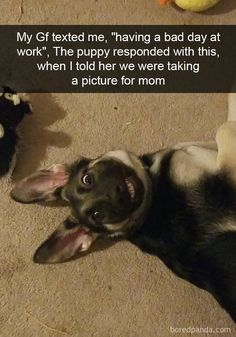 32 Funny and Cute Animal Pictures Of The Day - Funny Baby - 32 Funny and Cute Pictures Of The Day! The post 32 Funny and Cute Animal Pictures Of The Day appeared first on Gag Dad. Funny Animal Jokes, Funny Dog Memes, Cute Funny Animals, Funny Cute, Funny Dogs, Funny Puppies, Cute Animal Humor, Puppies Puppies, Mom Funny