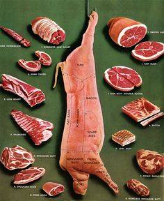 Anatomy of a pig and the different cuts of pork. Not the most appetizing photo…