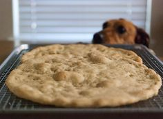 August 4. Get in mah belly now. #pizza #grainfree #glutenfree #getinmahbelly #dogsofinstagram #dog #365project