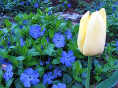 The Periwinkle has never been prettier...
