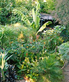 Melbourne tropical paradise