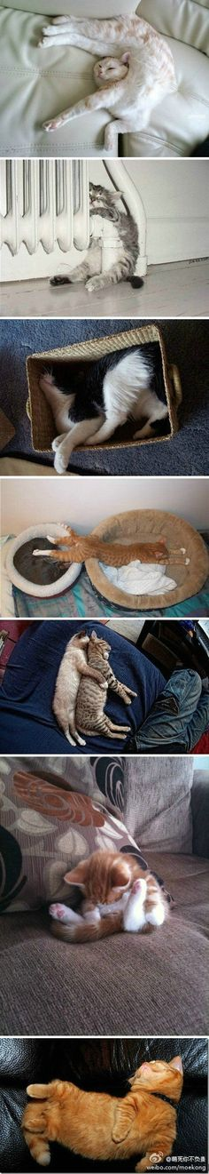 Sleepy kitties - how to get comfortable.  :)